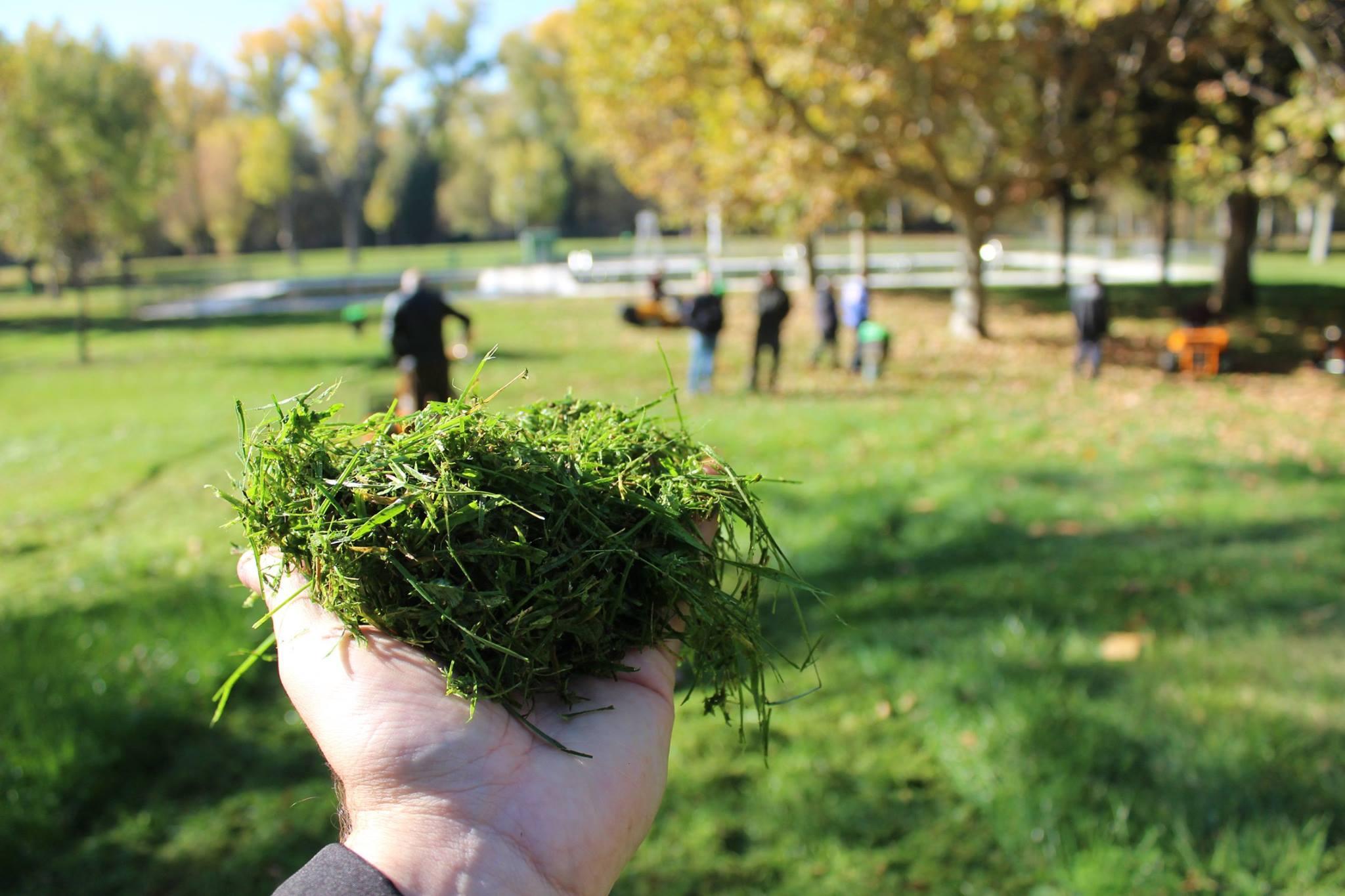 Cortacésped mulching 📣 ¿Por qué comprar y cuál es el mejor?